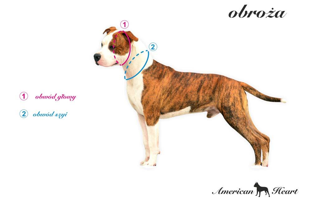 Inforgrafika prezentująca pomiar psa do obroży