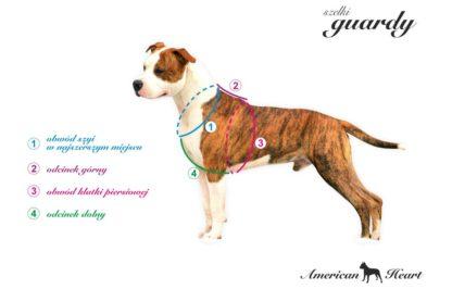 Greafika prezentująca pomiar psa do szelek quardy