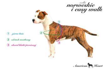 Jak mierzyć psa do szelek easy walk?