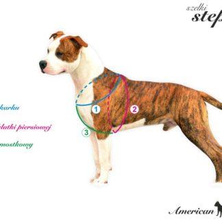 Grafika prezentuje pomiar psa do szelek step-in
