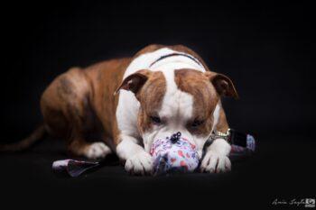My cute doggy - smycz miejska, woreczek na smaki