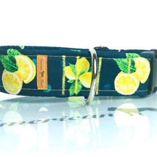 Cytrynki Obroża na zatrzask 4 cm